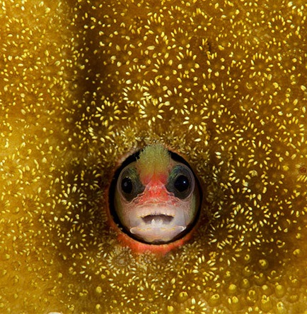 fish in coral.jpg
