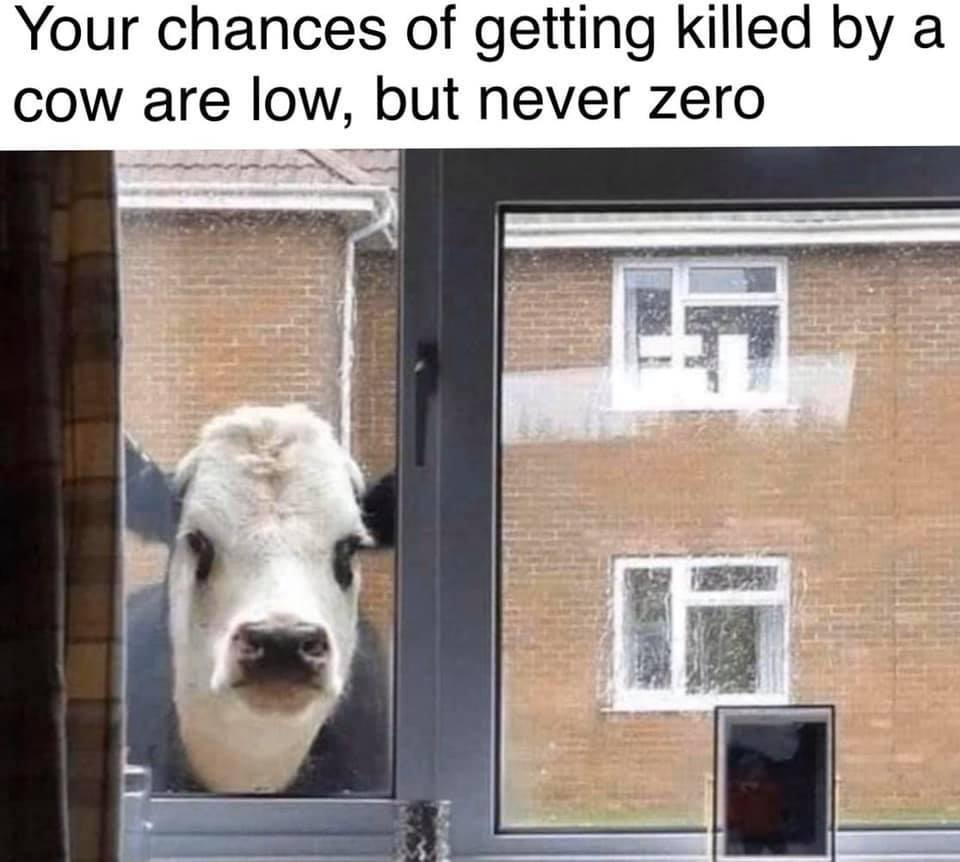 killed by a cow.jpg
