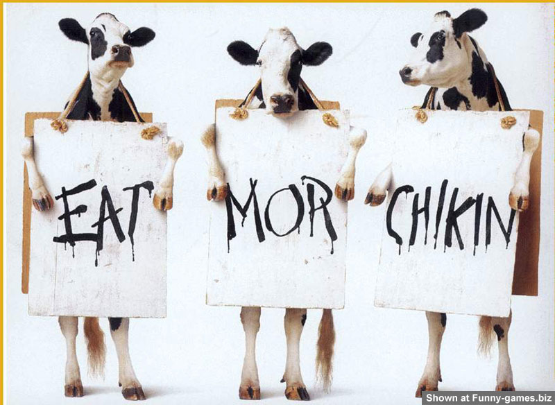 funny_cow_pic.jpg